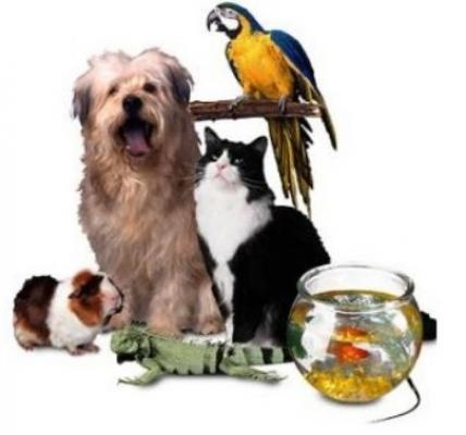 San Fernando Valley Pet Supply Retail Store For Sale
