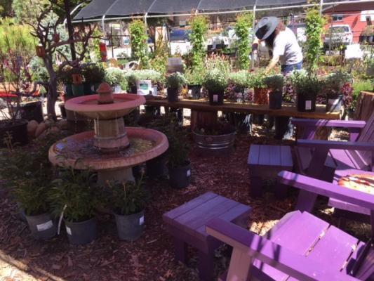 Caliifornia Native Plant Nursery Business For Sale