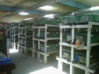Tropical Fish Distributor Business Opportunity For Sale, Los