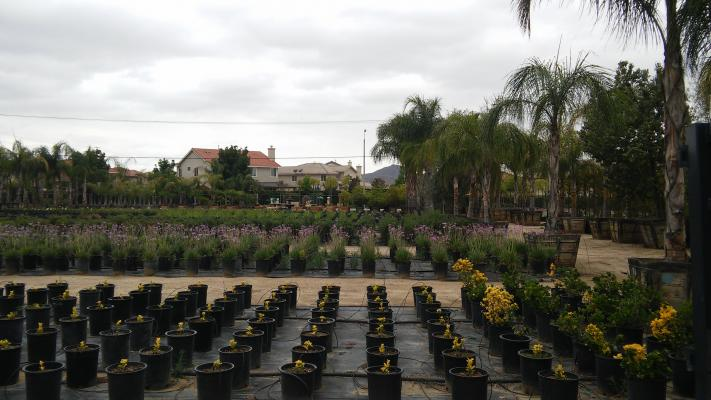 Riverside County Plant Nursery With
