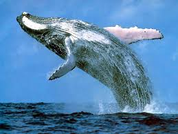 San Diego Established Whale Watching Tour Operator For Sale