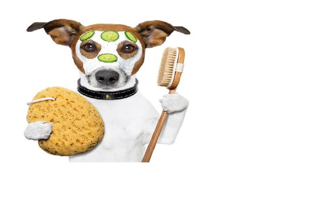 Pet grooming pet care boutique for sale in california ca pet murrieta riverside county pet grooming boutique for sale solutioingenieria Images