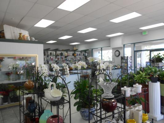 Flower Shop - Established For 51 Years Business For Sale