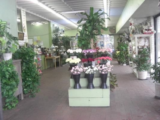 Redondo Beach Franchise Retail Flower Shop Business For Sale
