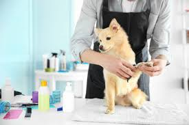 Marin County Pet Grooming And Daycare Service For Sale
