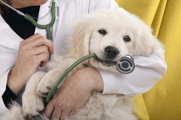 Sacramento / Foothills Area Veterinary Hospital With Real Estate For Sale