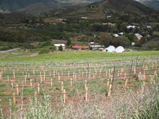 San Diego County Boutique Winery Vineyard For Sale