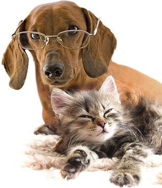 San Diego County Pet Care House Sitting Service Business For Sale