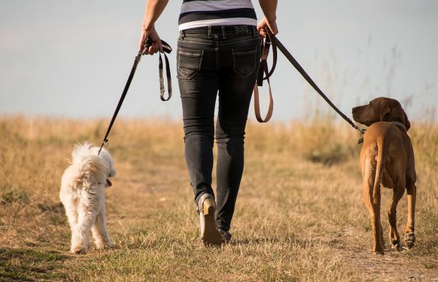 San Diego County Dog Walking Pet Sitting And Pet Care For Sale