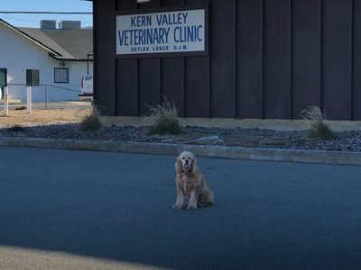 Lake Isabella, Kern County Mixed Animal Veterinary Practice With Real Estate For Sale